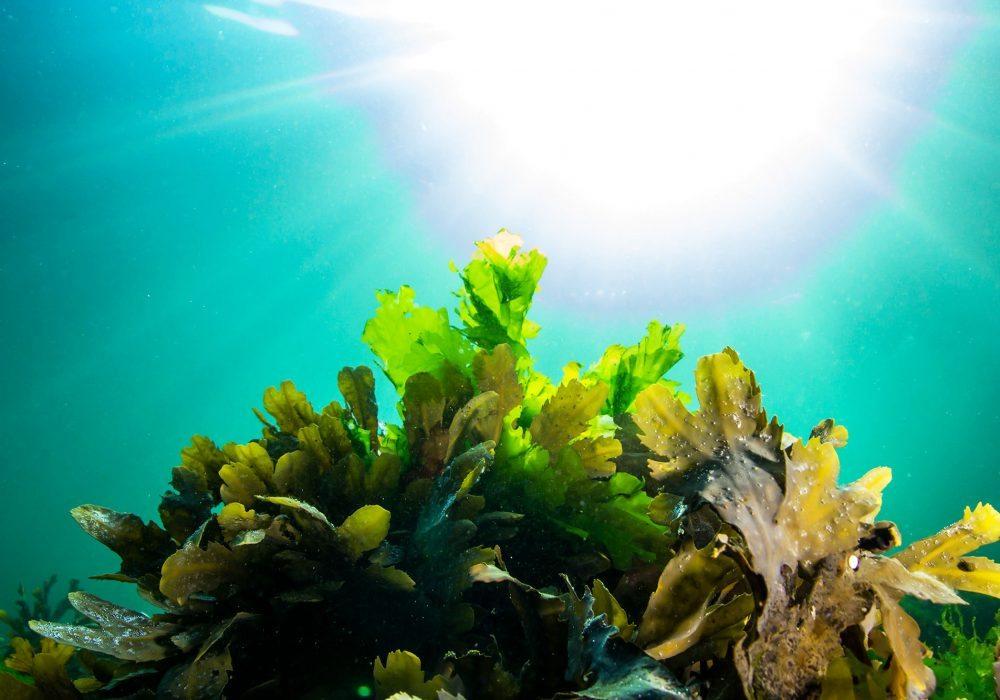 Ocean dive tour in Gardur in Iceland